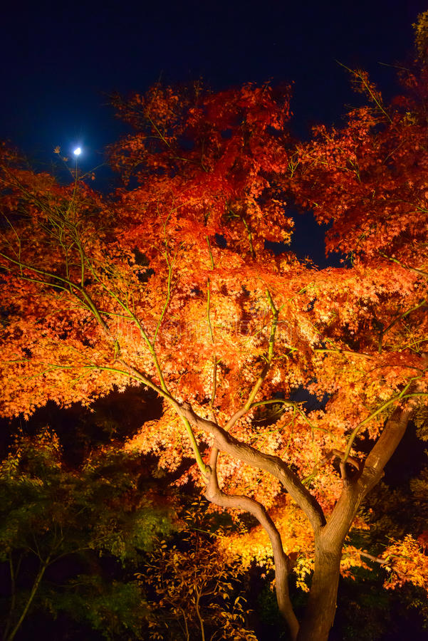 Download De Herfstgebladerte In Rikugien-Tuin, Komagome, Tokyo Stock Afbeelding - Afbeelding bestaande uit japan, japans: 54078951