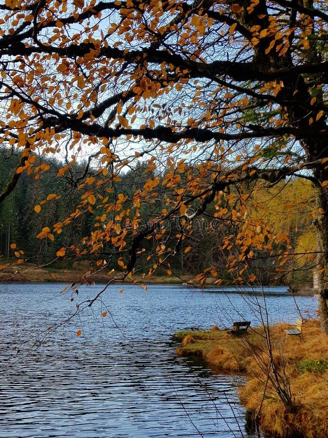 De herfstgevoel stock fotografie