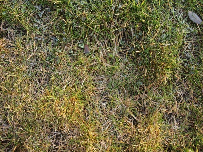 De herfstgras met groene en gele kleuren stock fotografie