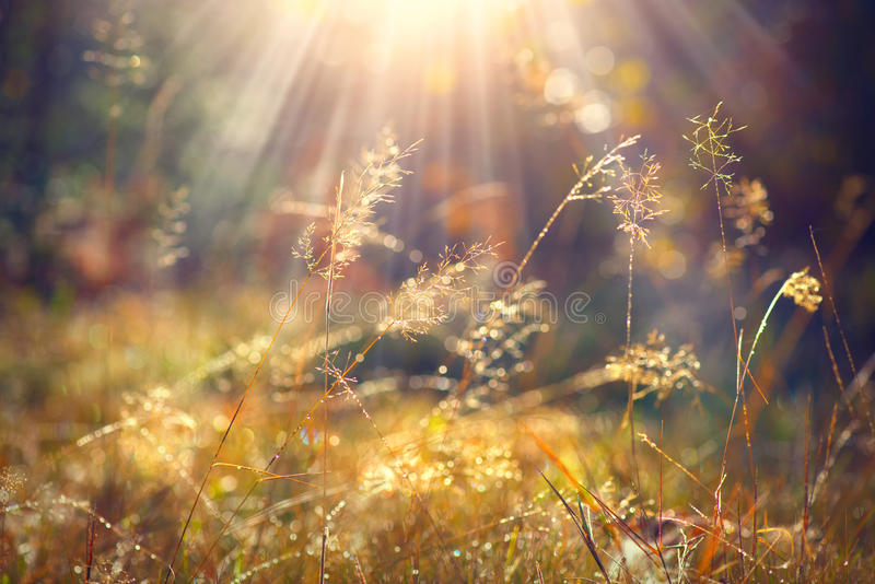 De herfstgras met ochtenddauw in zonlichtclose-up stock foto