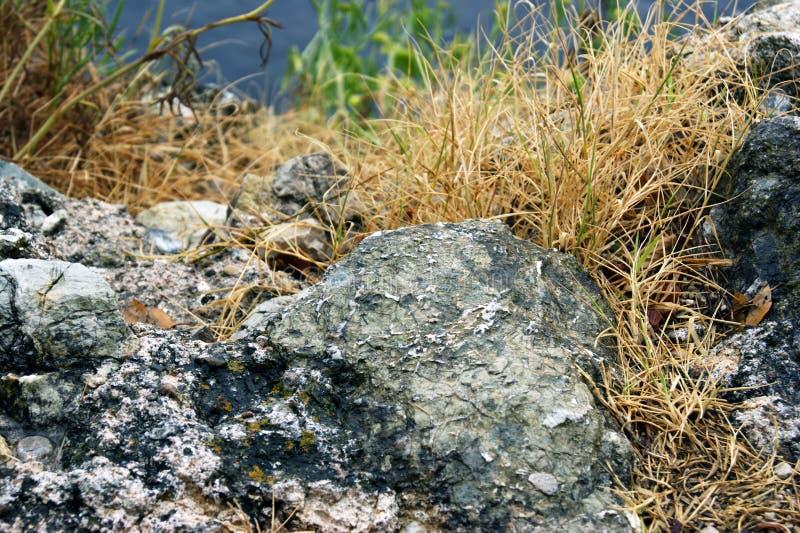 De herfstgras op de rotsen stock fotografie