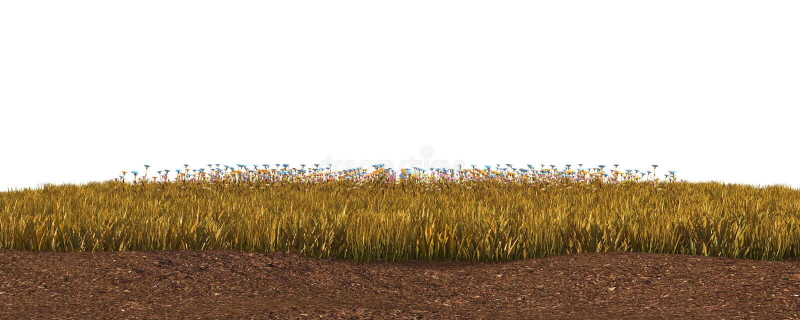 De herfstgras op witte 3D illustratie wordt geïsoleerd die als achtergrond royalty-vrije stock fotografie