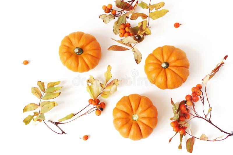 De herfstkader van weinig oranje pompoenen, lijsterbessen en kleurrijke die bladeren wordt gemaakt op witte lijstachtergrond die  royalty-vrije stock afbeeldingen