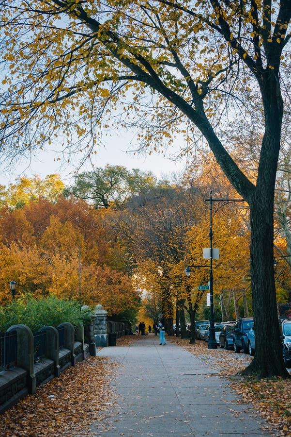 De herfstkleur bij Morningside-Hoogten, in Harlem, de Stad van New York stock foto