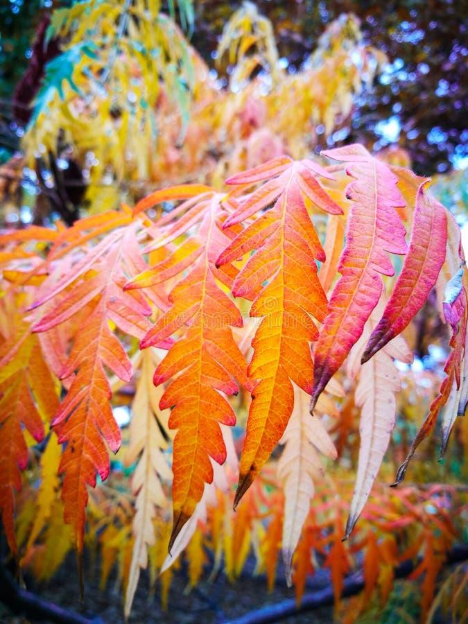 In de herfstkleuren royalty-vrije stock foto