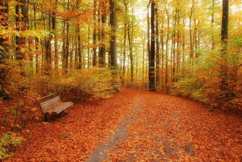 De herfstkleuren stock afbeeldingen