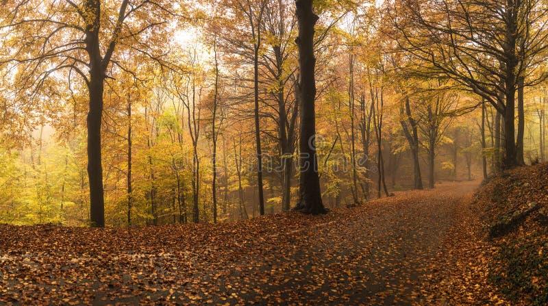 De herfstkleuren royalty-vrije stock afbeeldingen