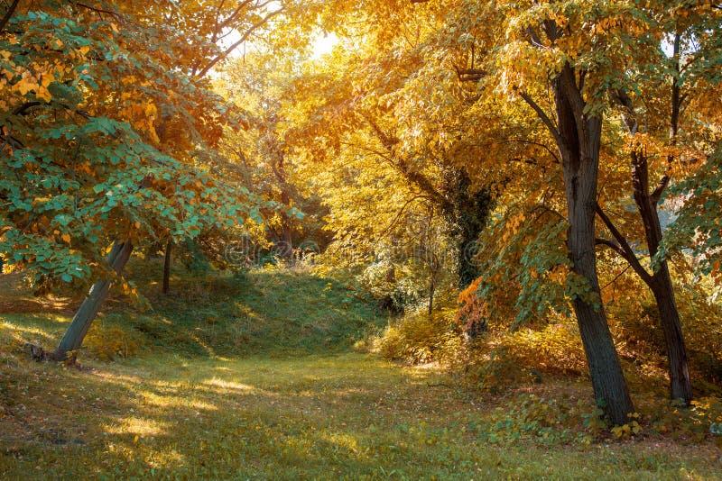 De herfstkleuren die in Autumn Forest genieten van royalty-vrije stock afbeelding