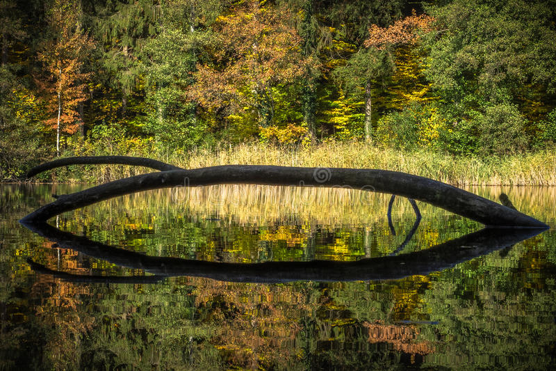 De herfstkleuren en bezinningen in een vijver stock foto's