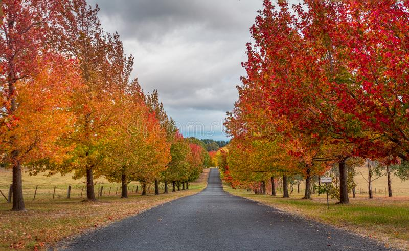 De herfstkleuren in Hartley stock foto