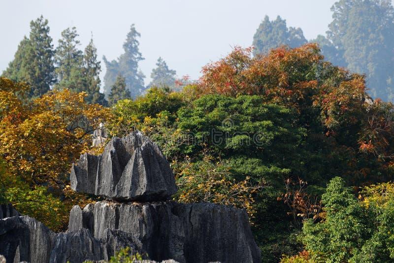 De herfstkleuren in het Steen Boslandschap in Yunnan, China stock foto