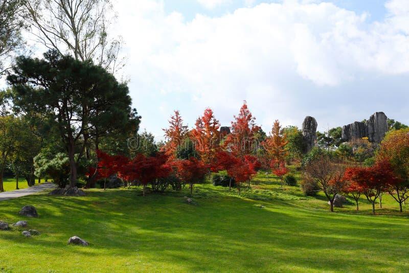 De herfstkleuren in het Steen Boslandschap in Yunnan, China royalty-vrije stock foto