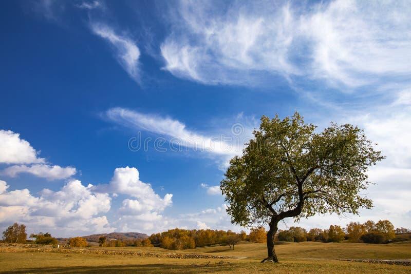 De herfstkleuren onder de blauwe hemel en de witte wolken stock foto