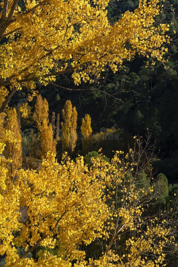 De herfstkleuren, Rio Mundo-bron, Natuurreservaat Los Calares del rÃo Mundo y DE La Sima, Siërra DE Alcaraz y del Segura royalty-vrije stock foto