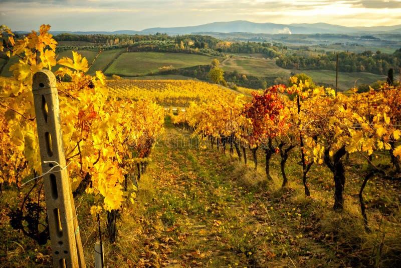 De herfstkleuren van de Chiantiwijngaarden tussen Siena en Florence Italië stock foto's