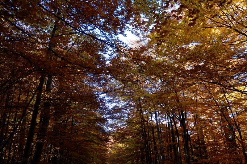 De herfstkleurpotlood in Karpatische Bergen 4 stock foto
