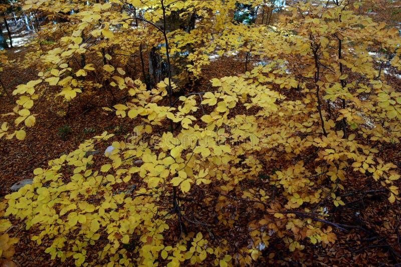 De herfstkleurpotlood in Karpatische Bergen 2 royalty-vrije stock afbeelding