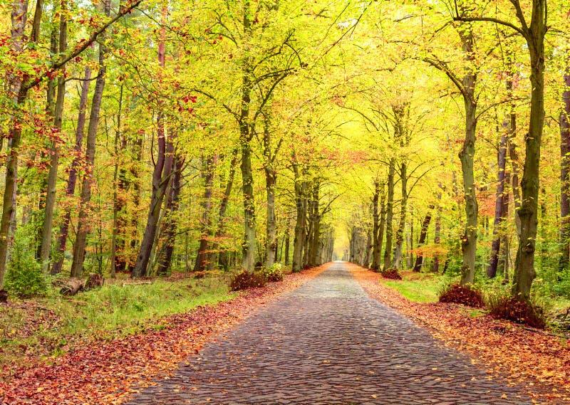 De herfstlandschap, baksteenweg tussen bomen, gevallen bladeren royalty-vrije stock afbeelding