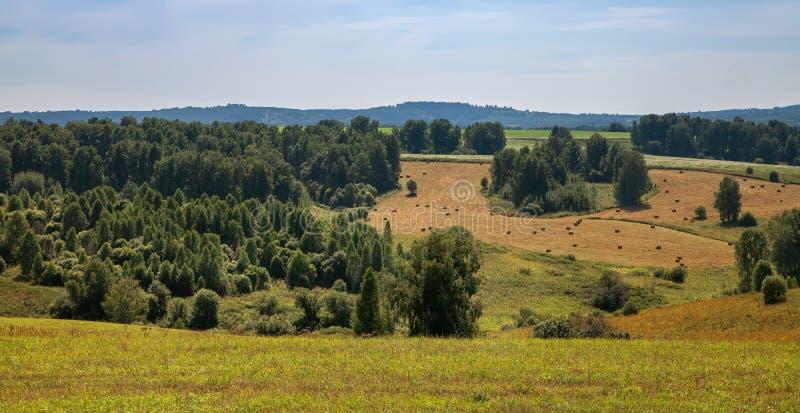 De herfstlandschap in de bergen van Rusland, gele bladeren, gras en groene bomen zuiver water van de bergrivier en stock foto's