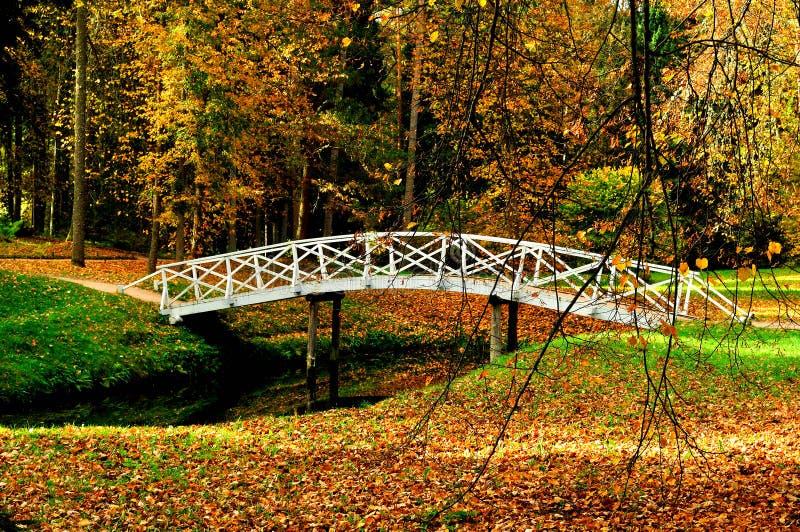 De herfstlandschap - de witte houten brug in het de herfstpark onder de gouden de herfstbomen en de gevallen herfst gaat weg stock foto