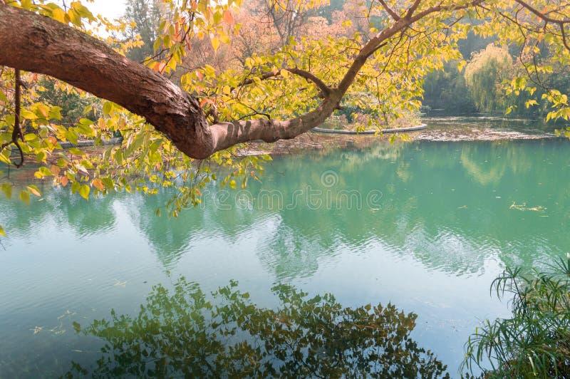 De herfstlandschap, gele bladeren op bomen en blauwe rivier stock foto's