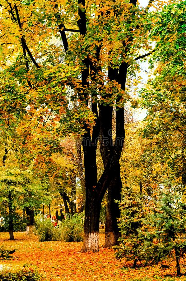 De herfstlandschap in het stadspark, mooie oranje Bladeren, natuurlijk verticaal licht, royalty-vrije stock foto's