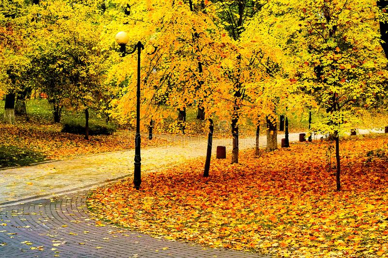 De herfstlandschap in het stadspark, mooie oranje horizontale Bladeren, natuurlijke licht, stock afbeelding