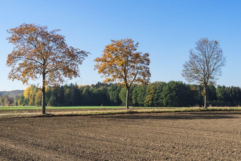 De herfstlandschap langs Romantische Weg, Buchdorf, Duitsland stock afbeeldingen