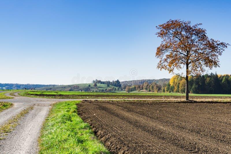 De herfstlandschap langs Romantische Weg, Buchdorf, Duitsland stock fotografie