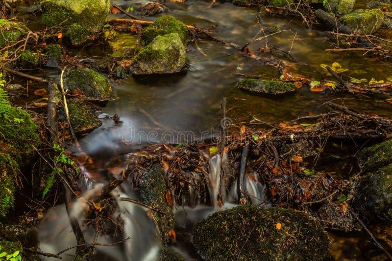 De herfstlandschap met bergrivier die onder bemoste stenen door de kleurrijke bos Zijdeachtige vlotte stroom van duidelijk water  royalty-vrije stock afbeelding