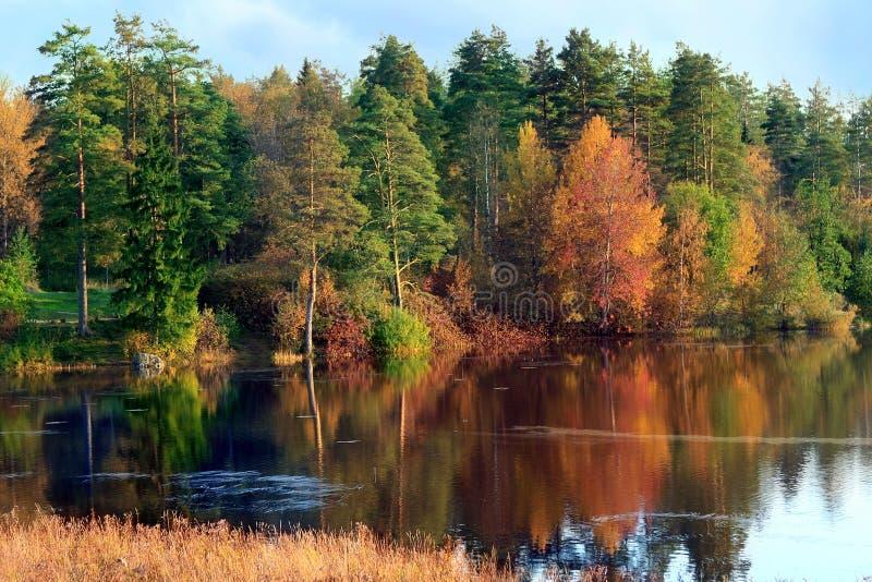 De herfstlandschap met een rivier en een bos stock afbeeldingen