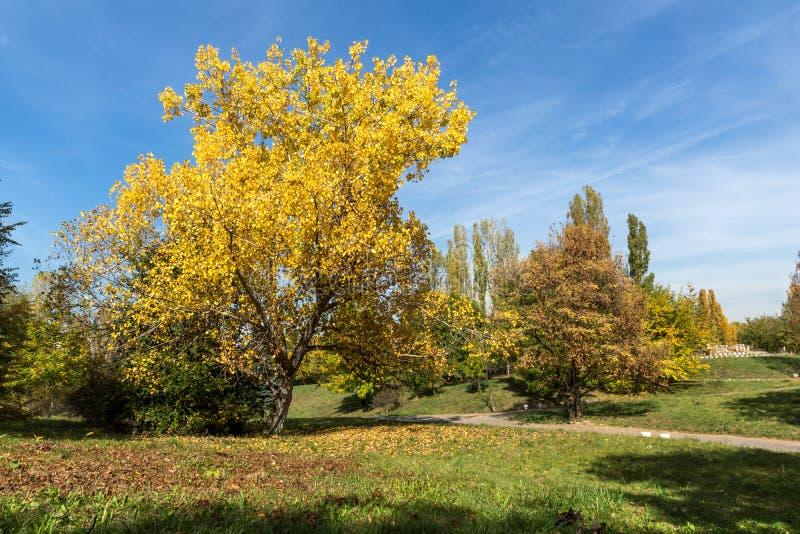 De herfstlandschap met Gele bomen in South Park in stad van Sofia, Bulgarije royalty-vrije stock foto