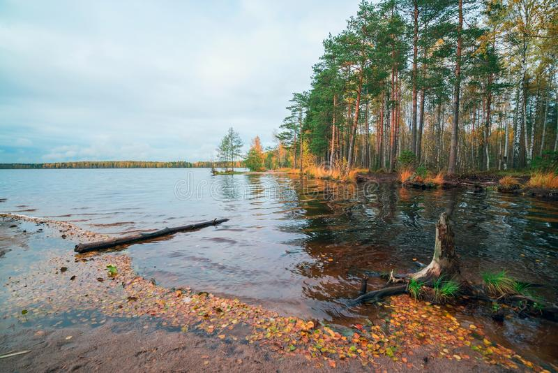 De herfstlandschap met de gevallen bladeren op het water stock fotografie