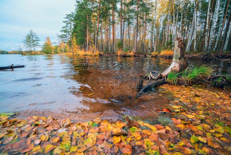 De herfstlandschap met de gevallen bladeren op het water royalty-vrije stock foto