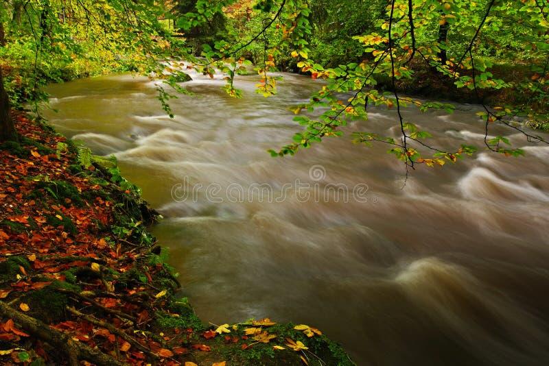 De herfstlandschap met oranje en gele bladeren in het water, grote rots op de achtergrond, Kamenice-rivier, in Tsjechisch nationa royalty-vrije stock afbeeldingen