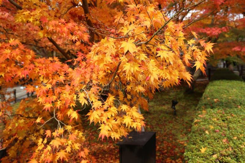 De herfstlandschap met rode en oranje kleurenbladeren royalty-vrije stock afbeeldingen