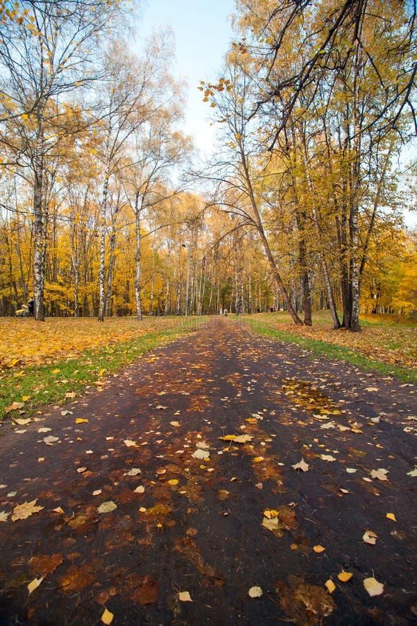 De herfstlandschap met voetganger een weg in de Herfstlandschap met voetganger een weg in het park van het stadspark royalty-vrije stock afbeelding