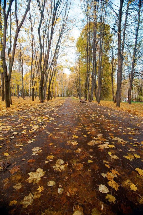 De herfstlandschap met voetganger een weg in stadspark stock afbeeldingen