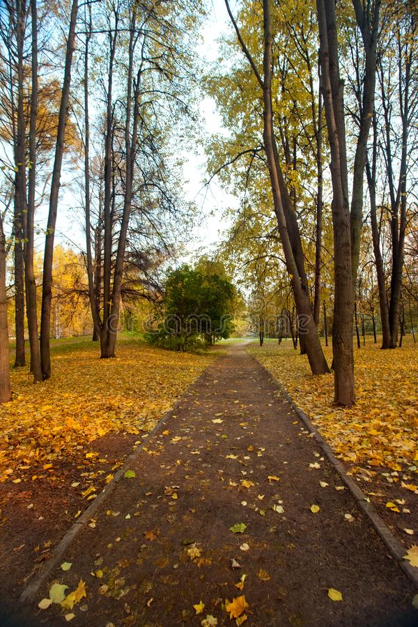 De herfstlandschap met voetganger een weg in stadspark royalty-vrije stock foto