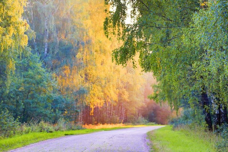 De herfstlandschap met weg en mooie gele gekleurde bomen Seizoengebonden de herfstlandschap stock afbeeldingen