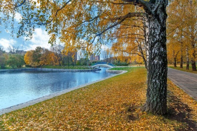 De herfstlandschap met weg van gouden berken, vijver en de brug royalty-vrije stock afbeelding