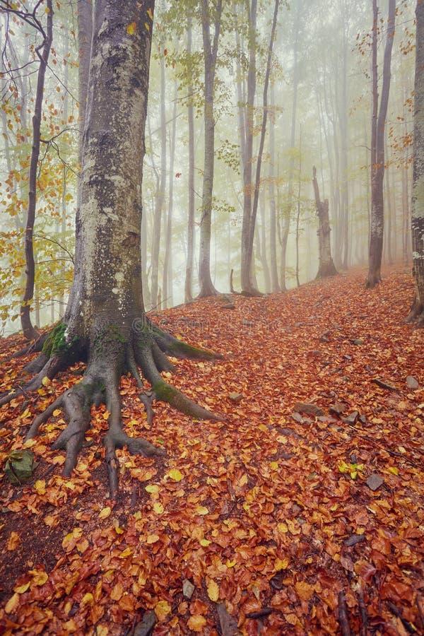 De herfstlandschap in mistig hout royalty-vrije stock afbeelding