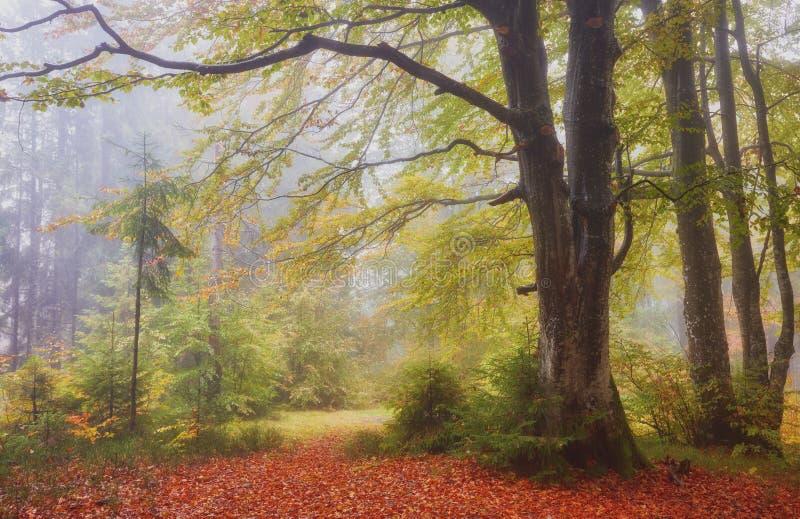 De herfstlandschap in mistig hout stock fotografie