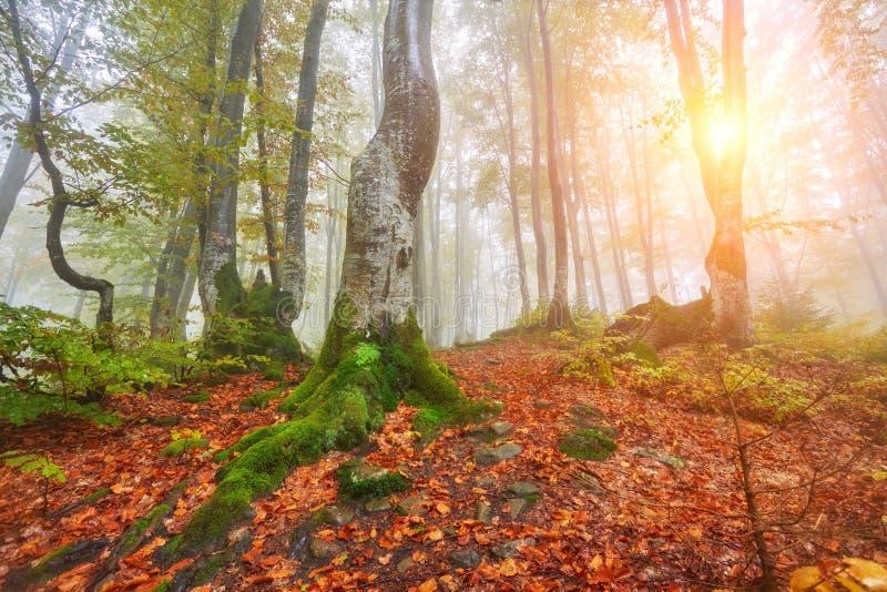 De herfstlandschap in mistig hout stock afbeelding