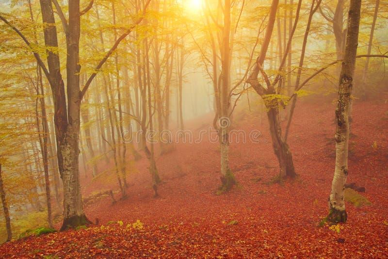 De herfstlandschap in mistig hout stock foto's