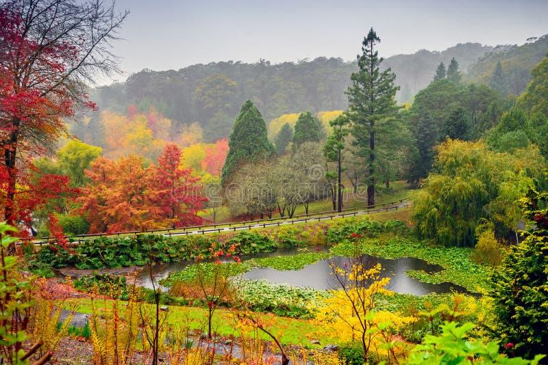 De herfstlandschap onder de regen stock afbeeldingen