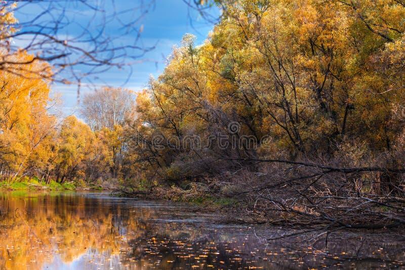 De herfstlandschap op de rivier Regi van westelijk Siberië, Novosibirsk royalty-vrije stock foto's