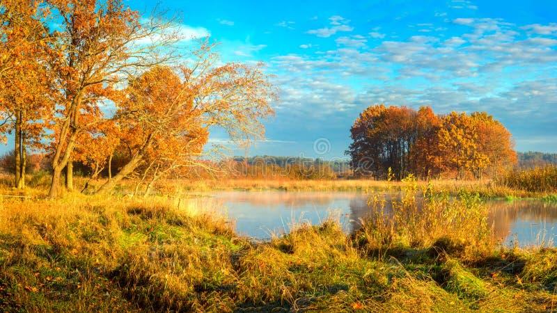 De herfstlandschap op zonnige dag Heldere gouden aard aan rivierkant in oktober Daling Mooie mening over rivier bij de herfst stock foto's