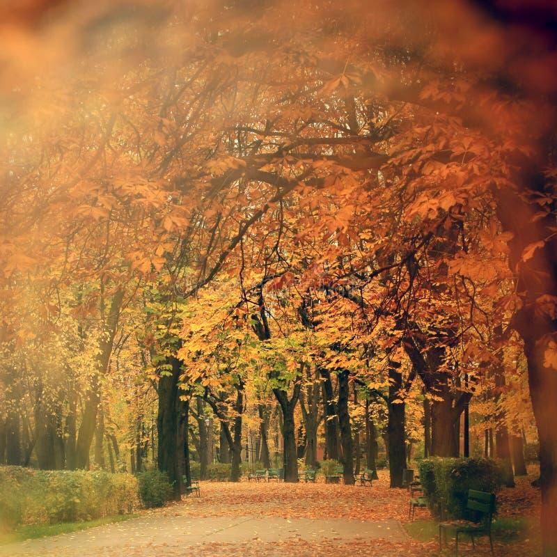 De herfstlandschap in park stock foto's