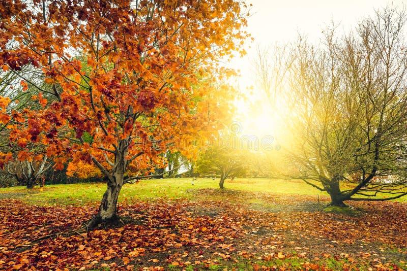 De herfstlandschap, park in de regen royalty-vrije stock fotografie